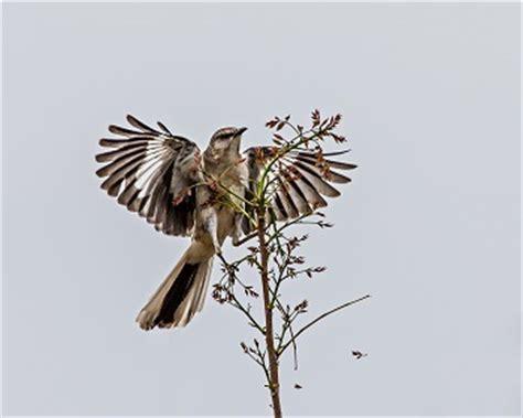 Essay Titles For To Kill A Mockingbird - bradfordtaverncom
